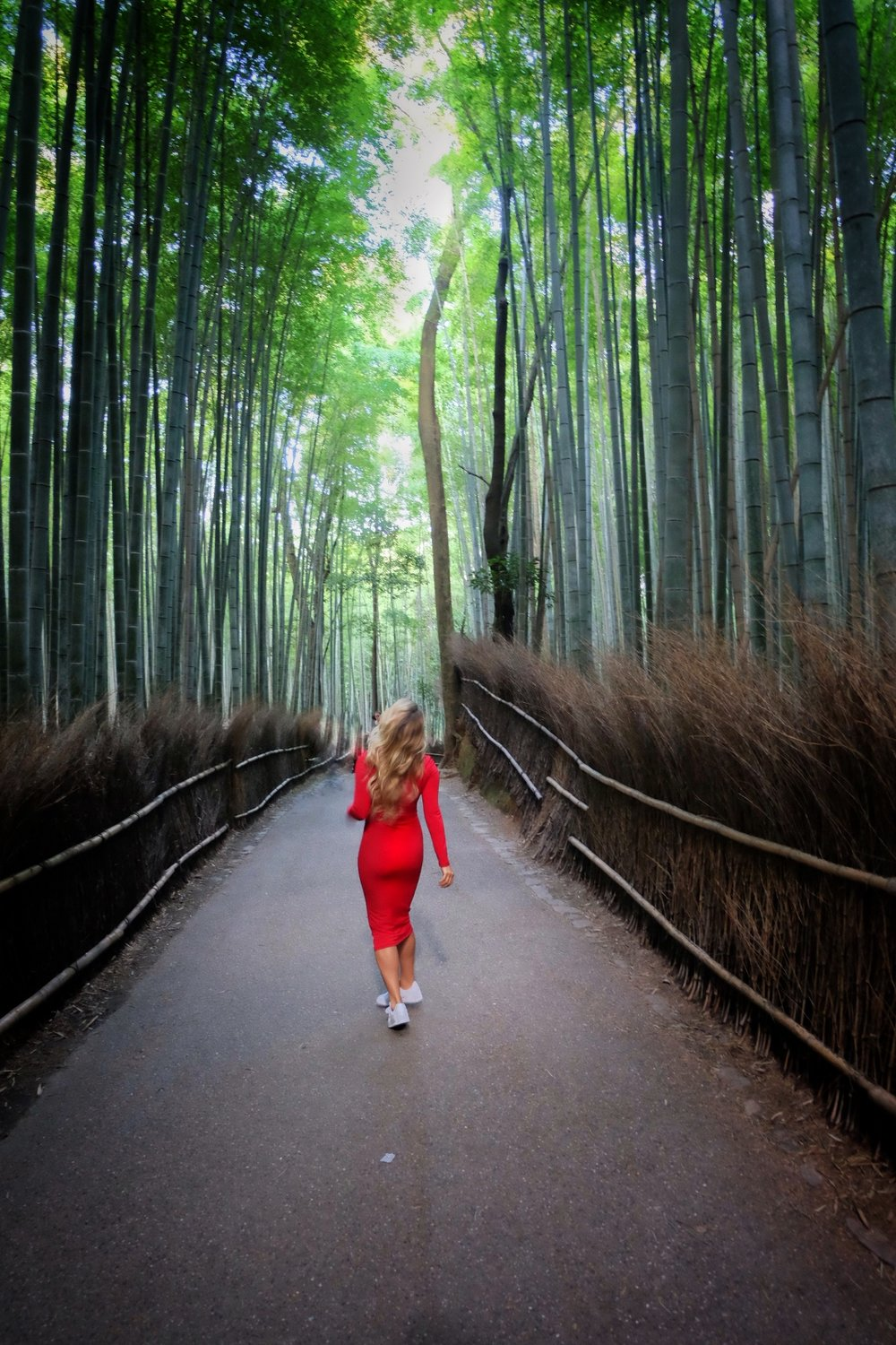 The Bamboo Grove in Kyoto
