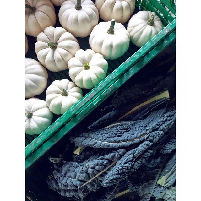 Black kale and spaceship squash 🚀🌱 #linnestadgård #økogård #organicfarming #renmat #grønnmat #eatyourveg #kortreist #rettfrabonden #norgetrengerbonden #ås #oslo