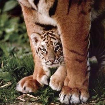 Tai Chi cubs.jpeg