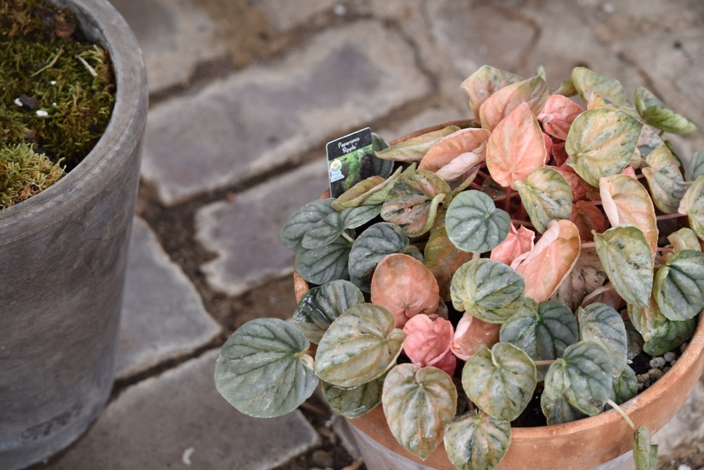 Peach and Green on Brick
