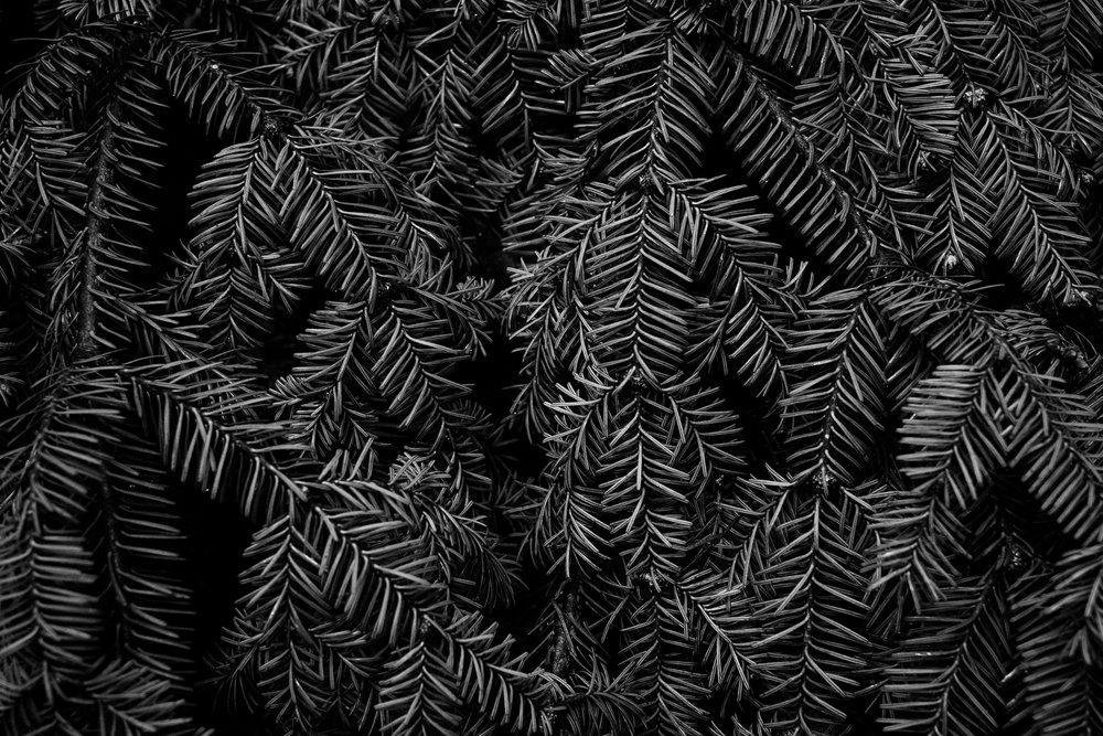 andrewfrasz_textures-1.jpg