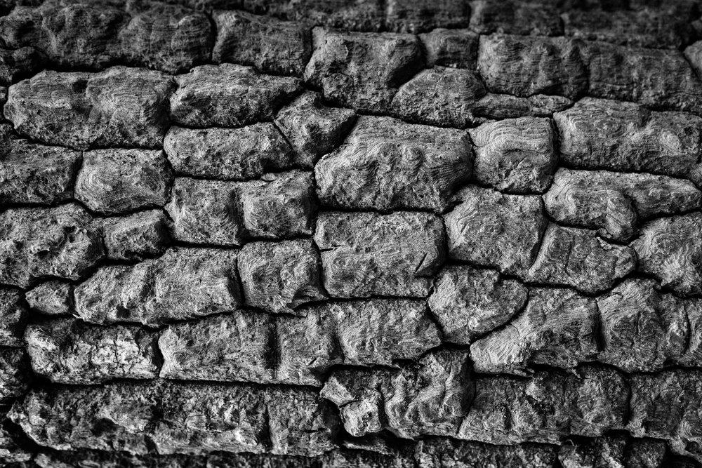 andrewfrasz_textures-12.jpg