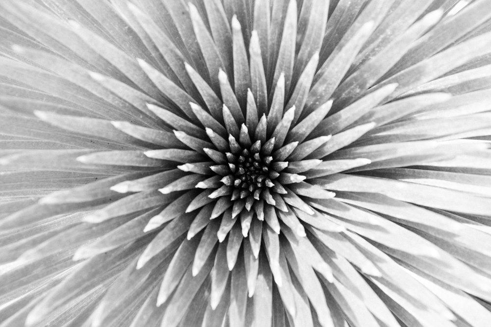 andrewfrasz_textures-15.jpg