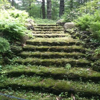HEALING WITH NATURE: FOREST BATHING at Tower Hill Botanic Garden ...