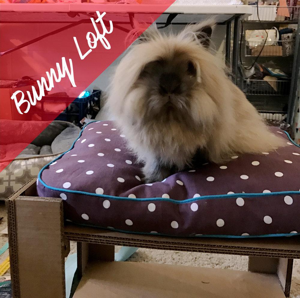 rabbit loft