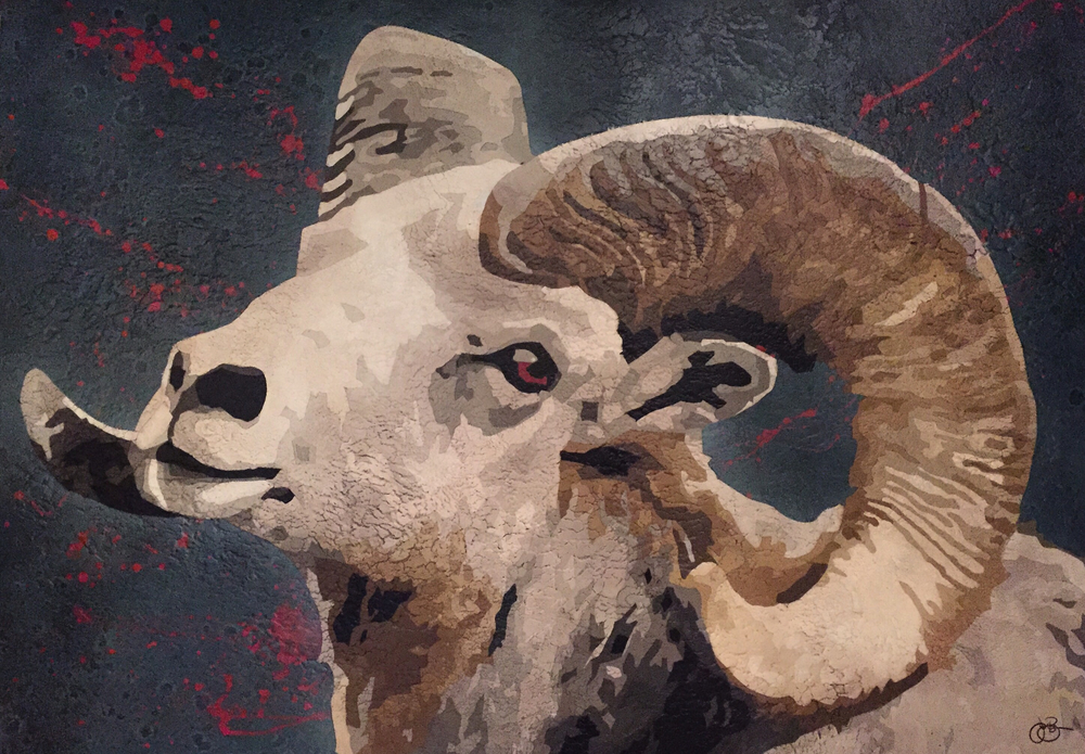 Ovis Aries 3