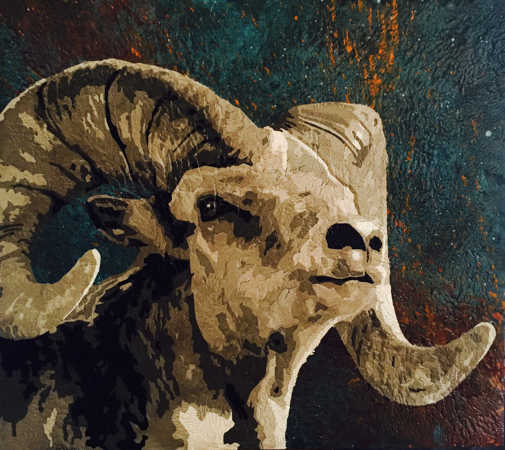 Ovis Aries 1