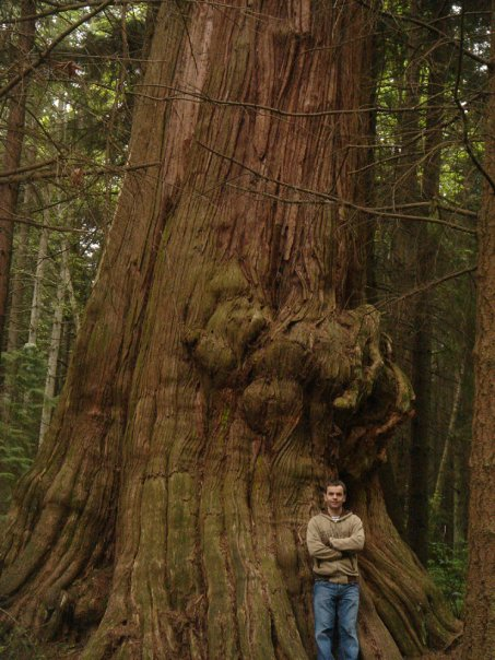 Giant Red Cedar burl