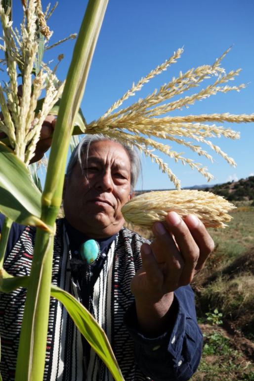Louie Hena, elder and seed saver at the Tesuque Pueblo in New Mexico, stands in his cornfield and explains the heritage of corn and his people.