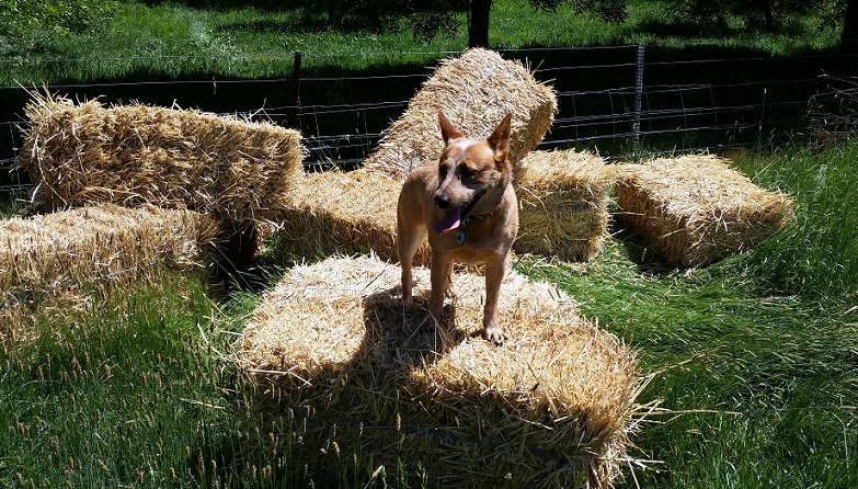 Skey on bales.jpg