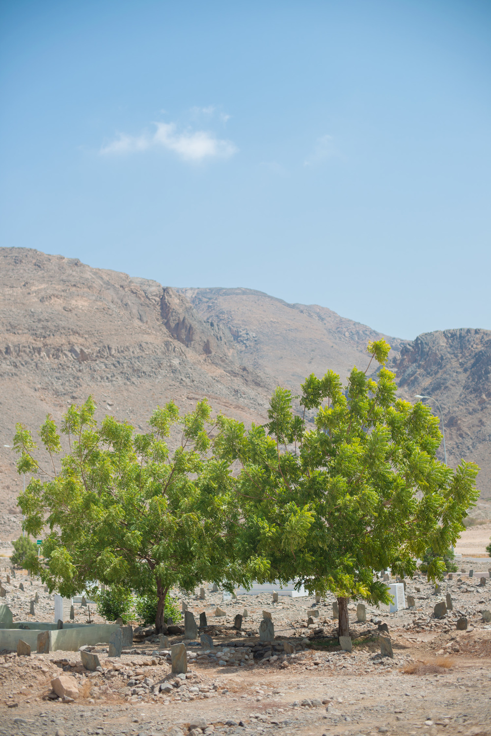 12_Chhandak Pradhan-place-Saud_Bhawan-travel_Oman.jpg