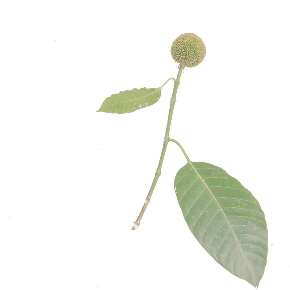 12_Chhandak Pradhan-Object-Bengal-Bengali.jpg