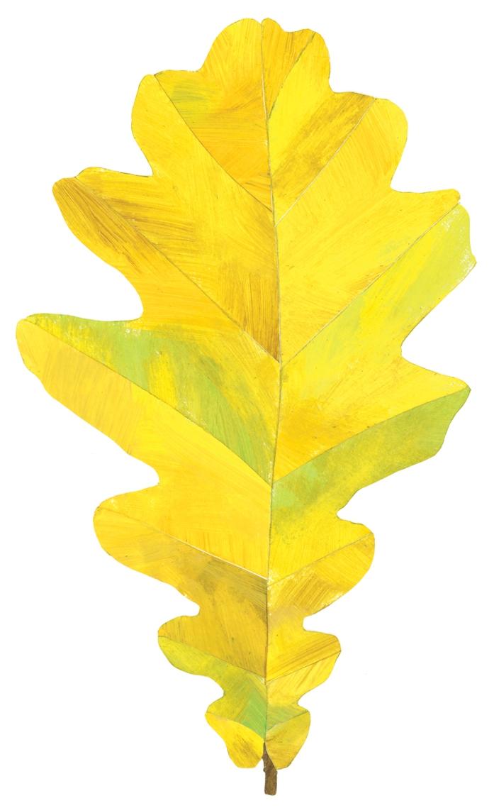 fall-leaf.jpg