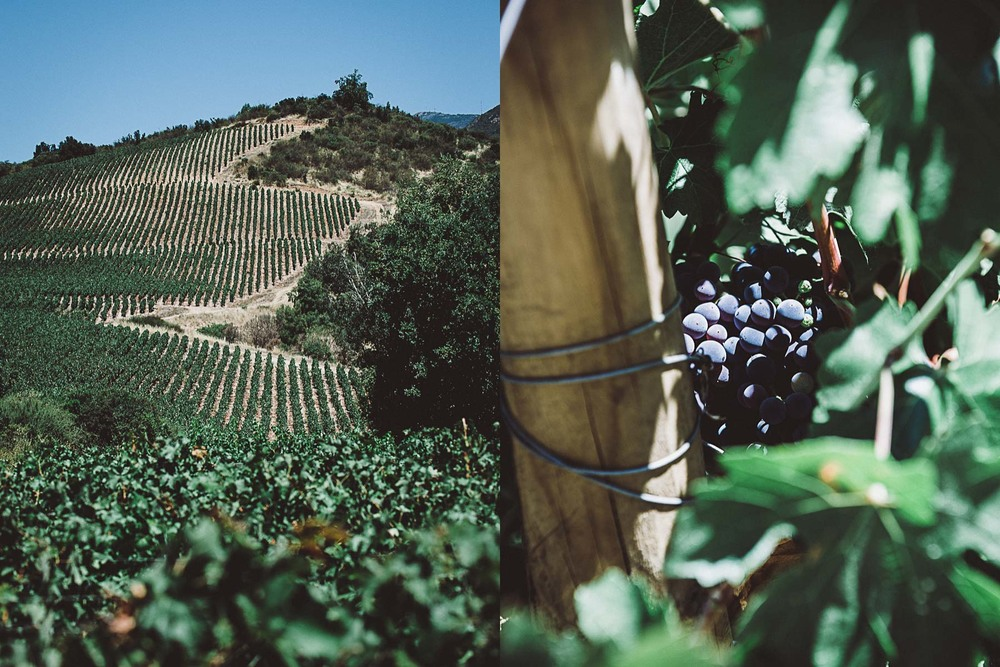 Carmenere vineyards at Vina Vik, a Chilean wine resort and hotel.