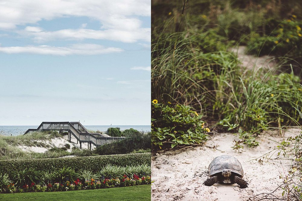 The boardwalk, sand dunes, and beach turtles at the Ritz-Carlton, Amelia Island.