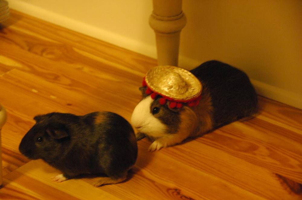 Hay-Hay and Yo-Yo celebrating Cinco de mayo 2012!