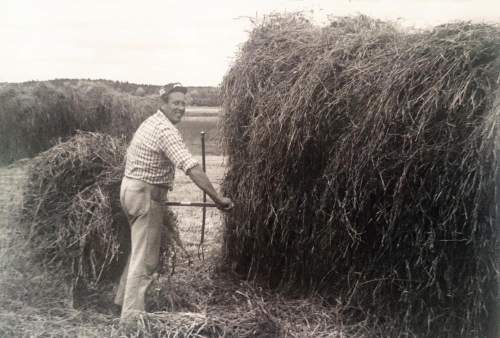 Tage hässjar hö 1967.