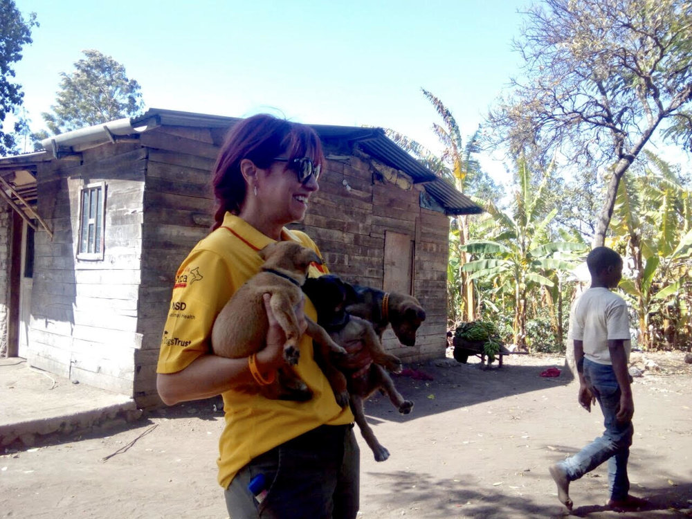 Dr. Torok moving a litter of pups to the vaccine station.