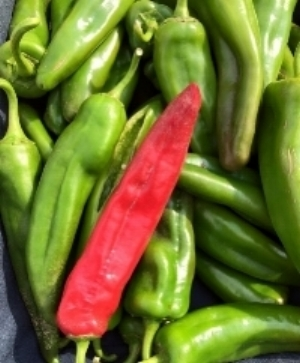 fresh peppers.jpg