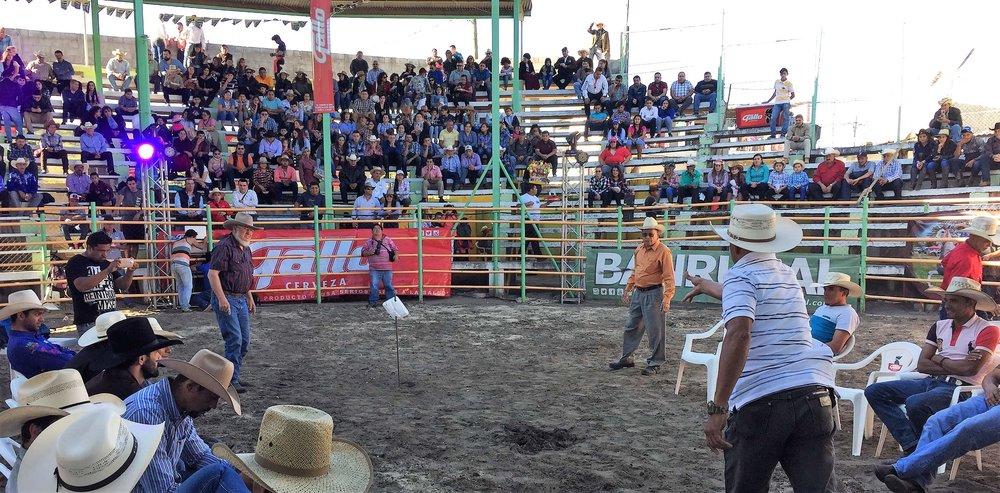 Bull-rider Horseshoes Agua Blanca Rodeo