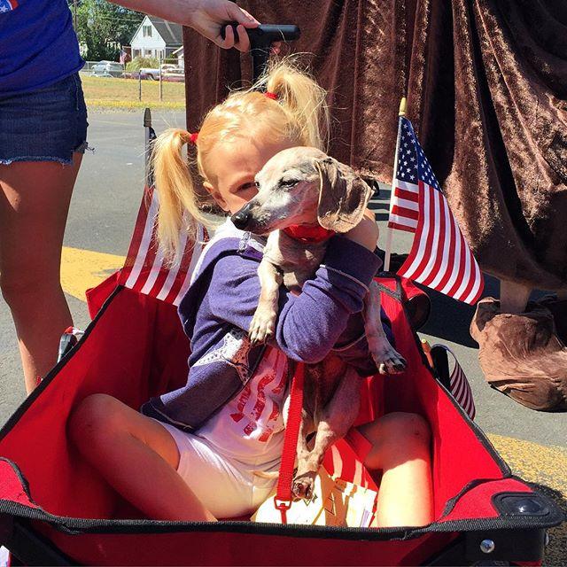 Scooter's ready for the parade... Are you? 🇺🇸🇺🇸🇺🇸 #pnw #pdx #pnwonderful #upperleftusa #oregoncoast #rockawaybeach #wienerdog #dachshunddaily #dachshundpics #doxiestuff #weinerdogs #doxiholics #doxieobsessed #dachshundsunlimited #ilovemydog  #dachshundrescue #dachshunddaily #dachshundpics #sausagedogcentral  #dachshundsofinstagram #wienerdog #pet #doxies #weenies #wienerdograces #instacute #doxieig #sausagedogcentral #whoruntheworldWEENS #firecrackernationals #barkbox #tillamook #tillamookcounty