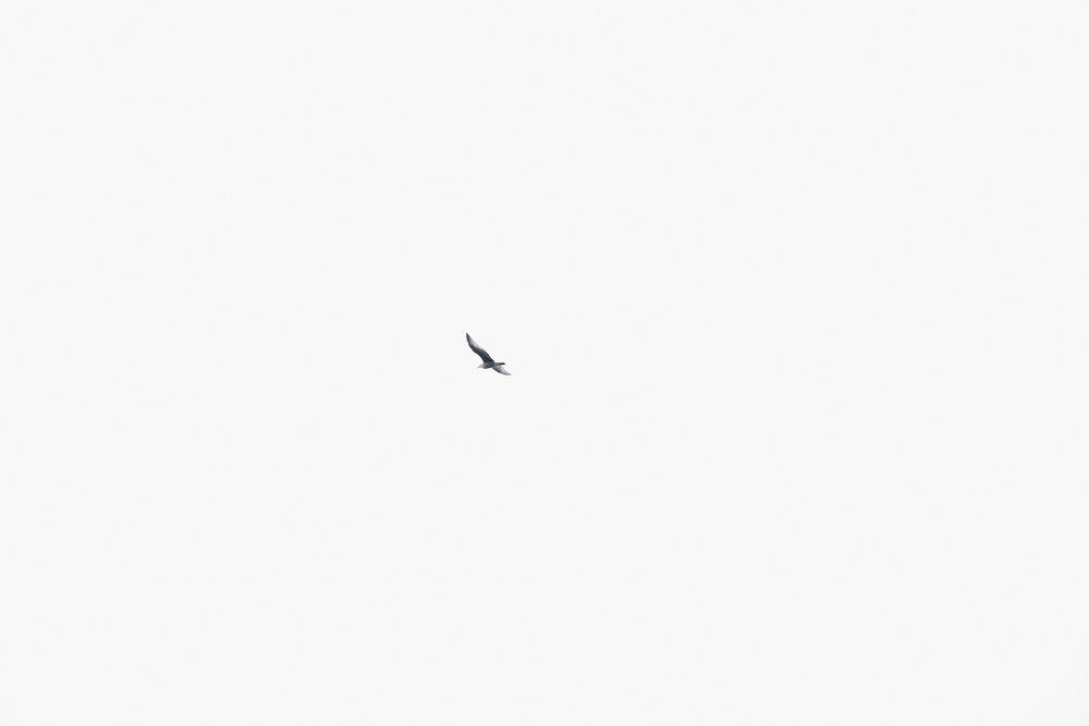 fawn_ocean_1