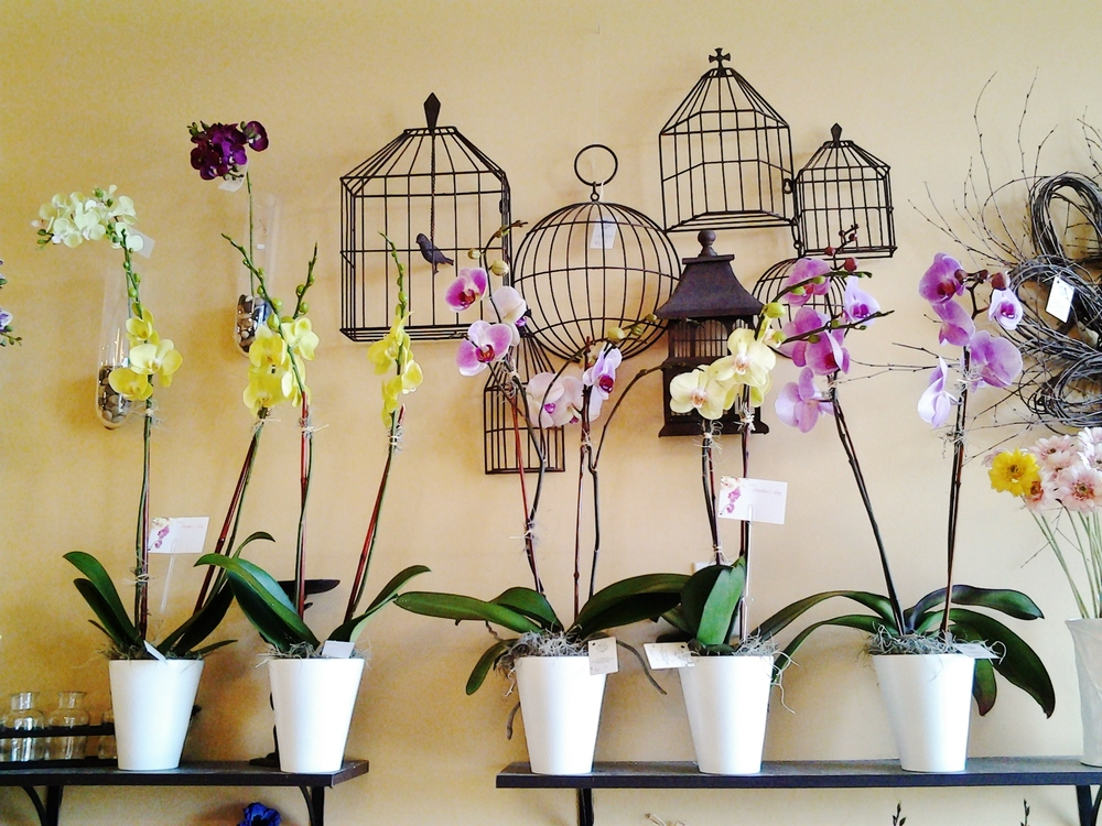 E13   $60 - $85 double-spike orchids. $60 as shown.