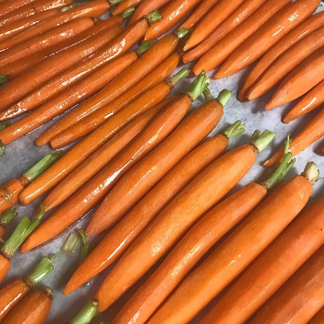 Recipe Testing! 🥕🥕🥕 #theperfectcarrot #rabbitfood