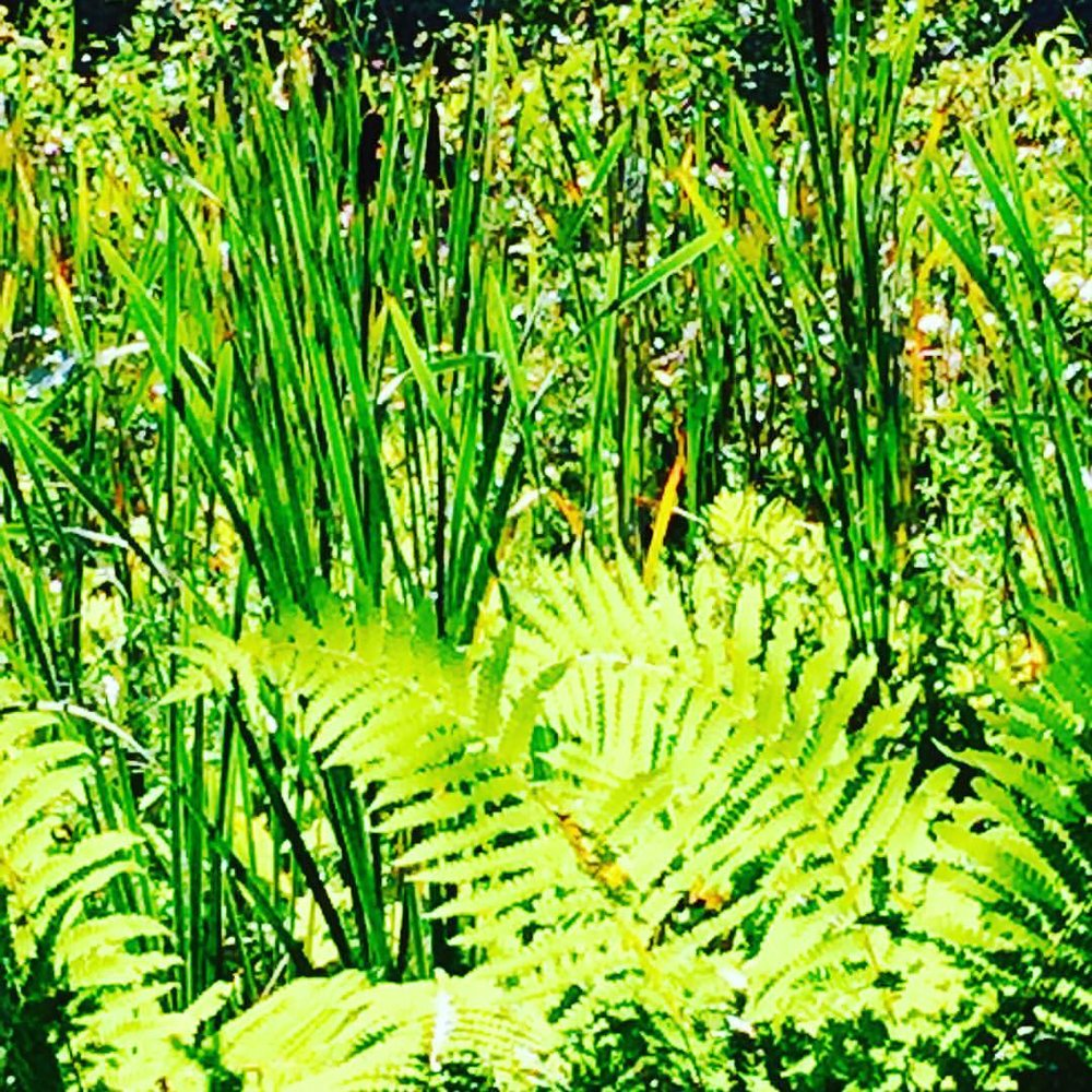 Cattails & Fern.jpg