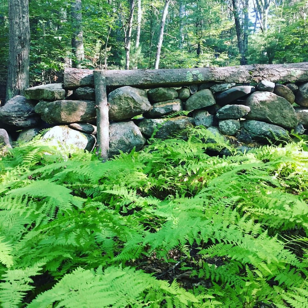 Stone wall in ferns