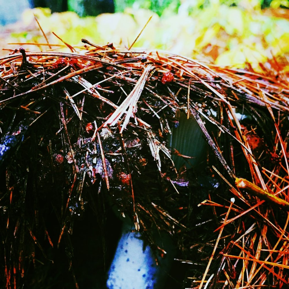 Tented Mushroom