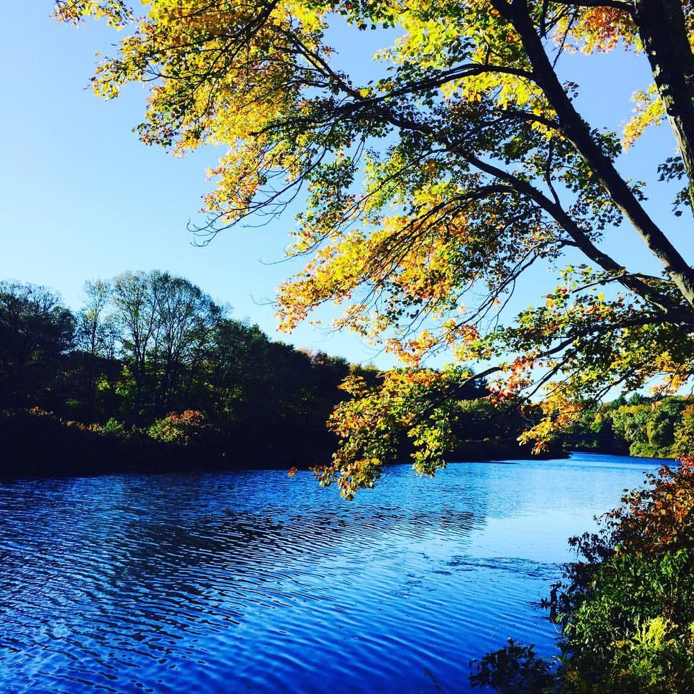 Charles River Foliage