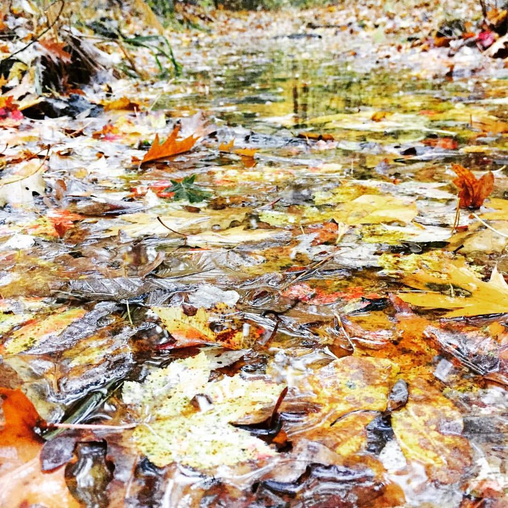 Leaf puddled path