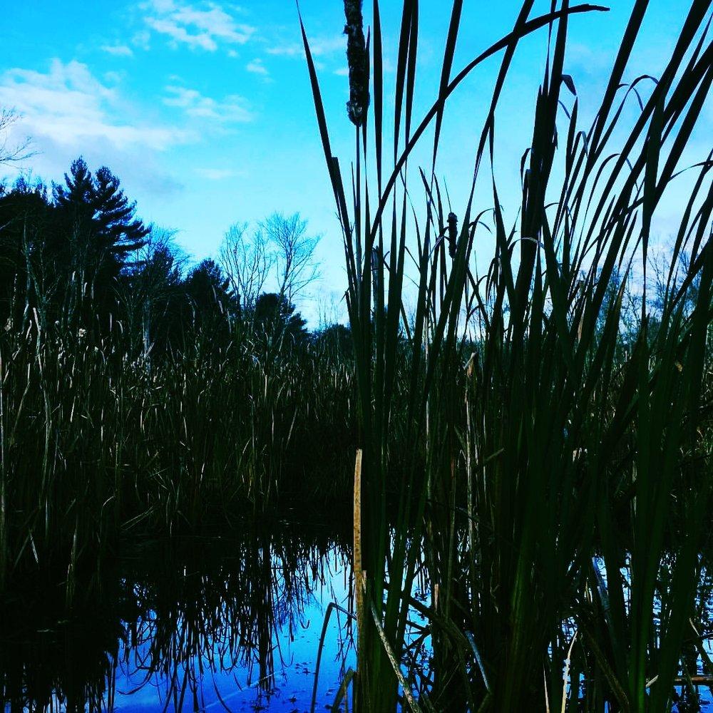 Blue Marsh November