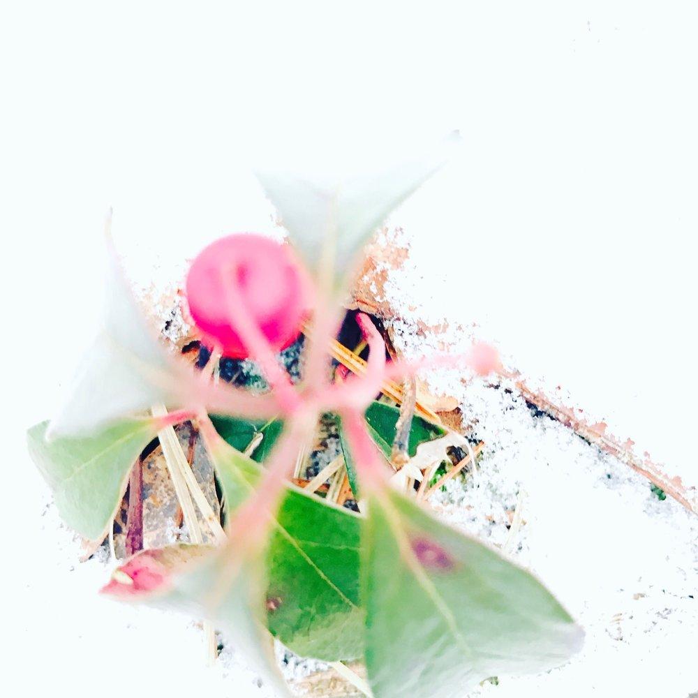 Wintergreen2.jpg