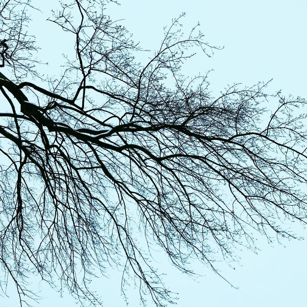 Quiet Branches