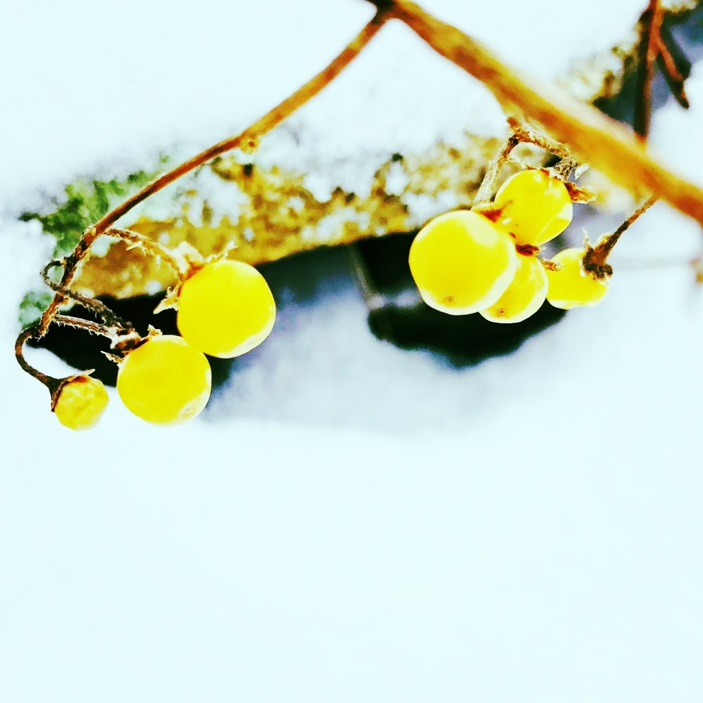 Stone Wall Berries