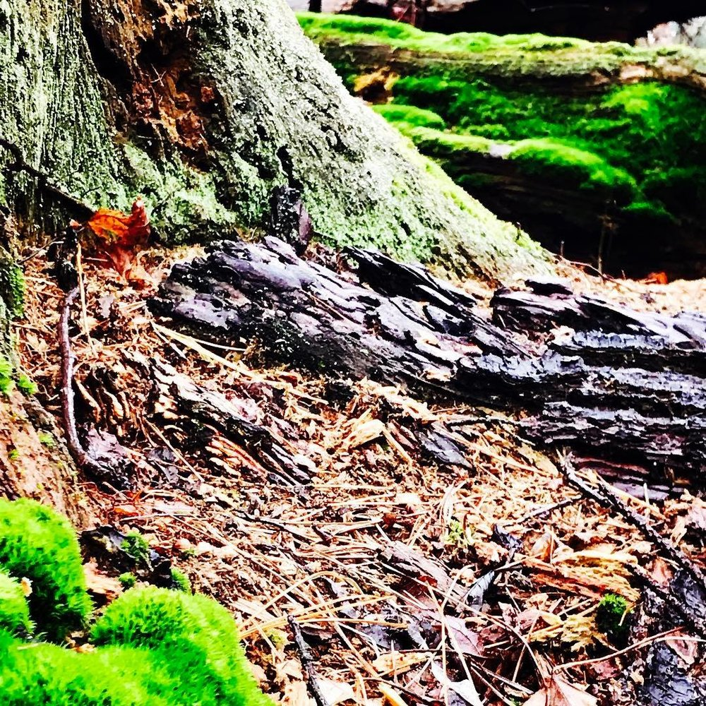 tree and moss.jpg