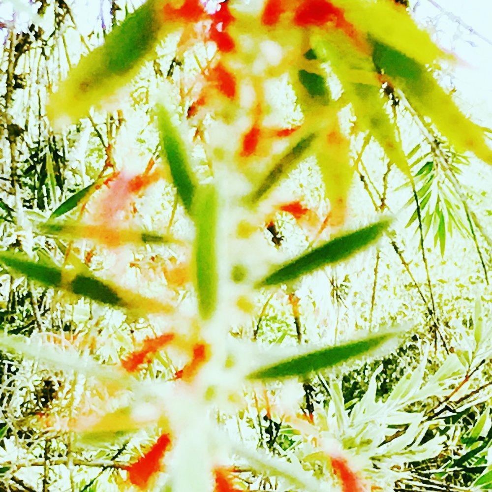 plant abract flo.JPG