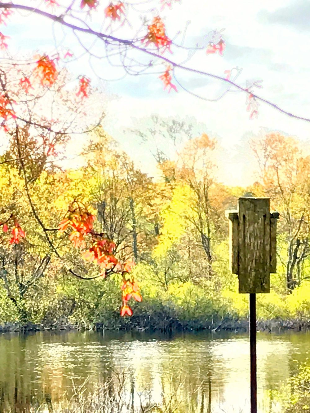 Birdhouse on the Charles