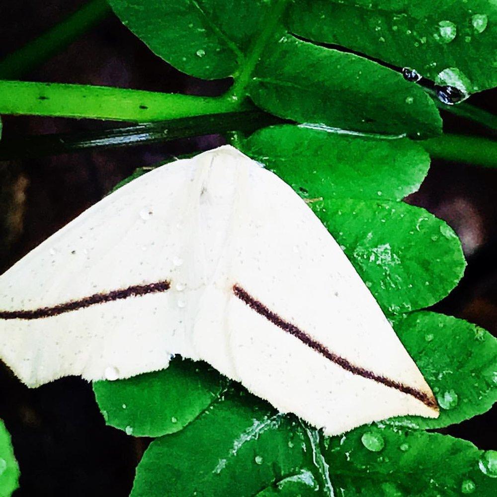 Moth on Fern