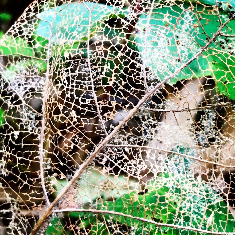 leaf decomp.JPG
