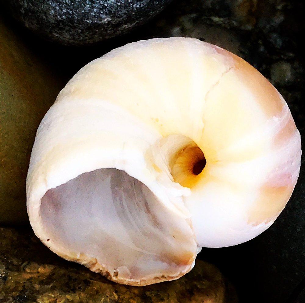 sea shell 1.JPG