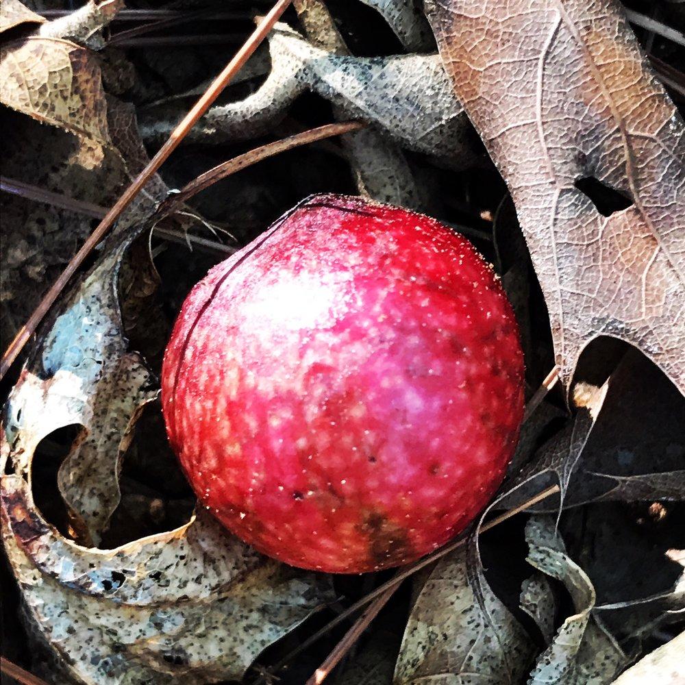 tree seed.JPG
