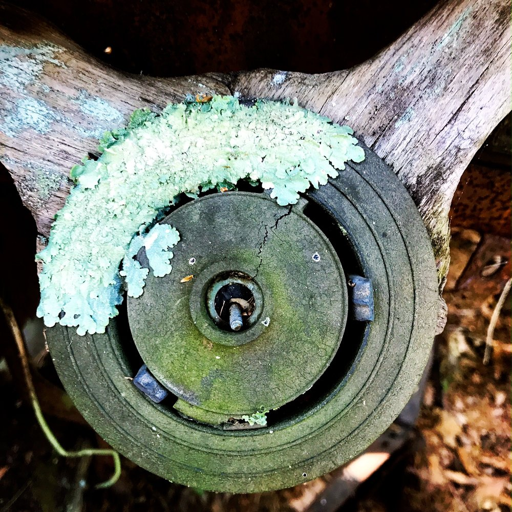 Lichen Growing on a Rusty Steering Wheel