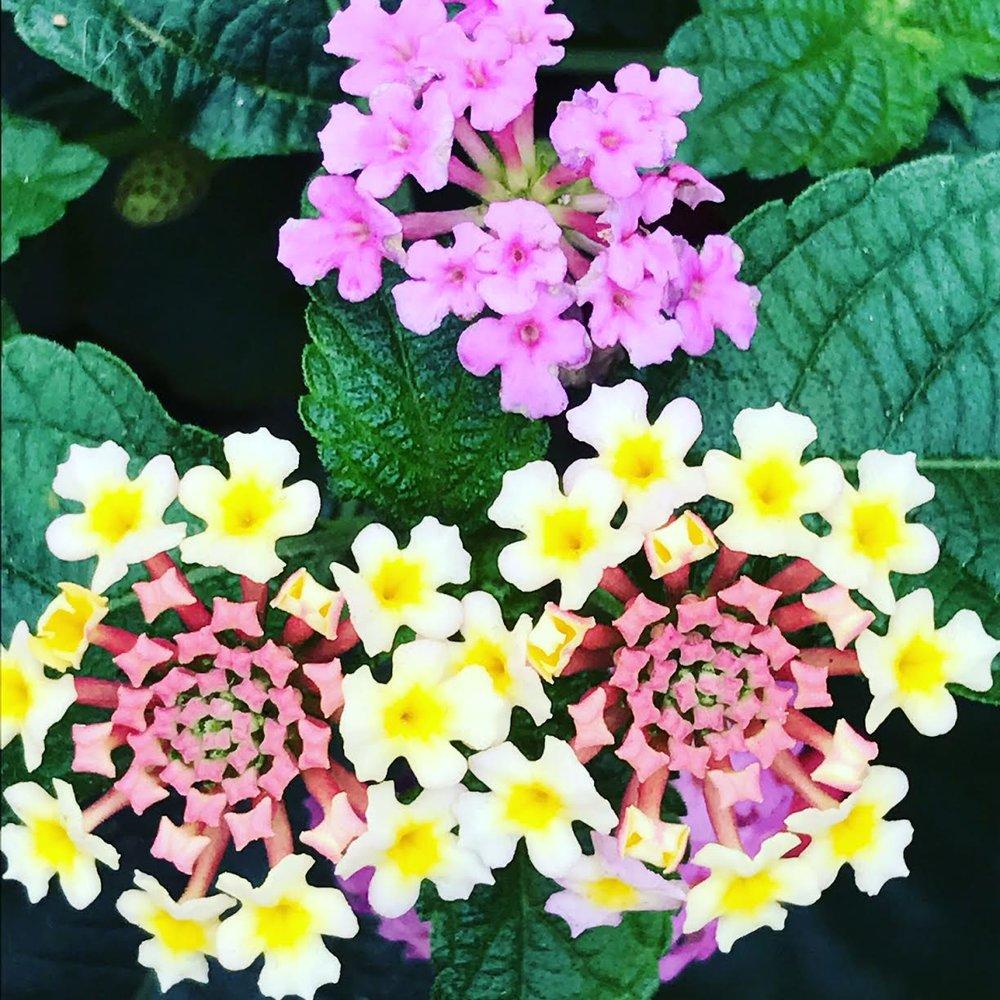Flowering Plants, US Open, Flushing Meadows