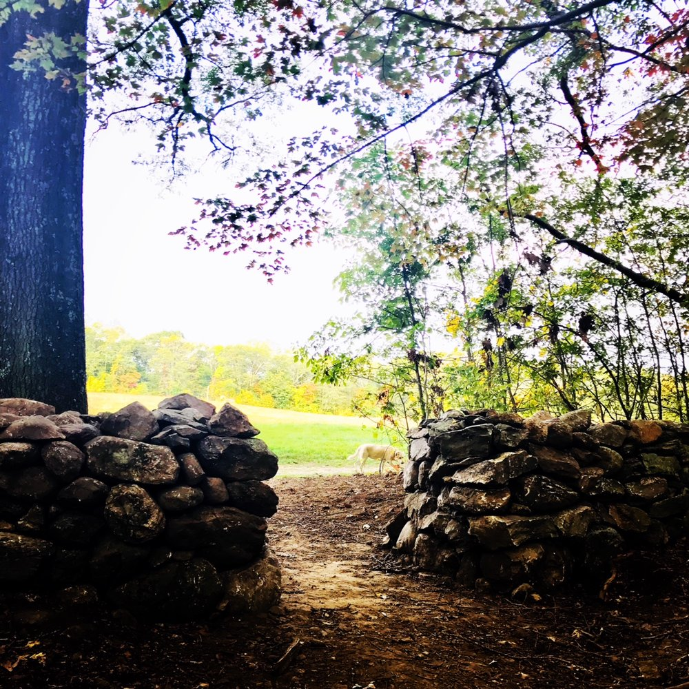 meadow wall.JPG