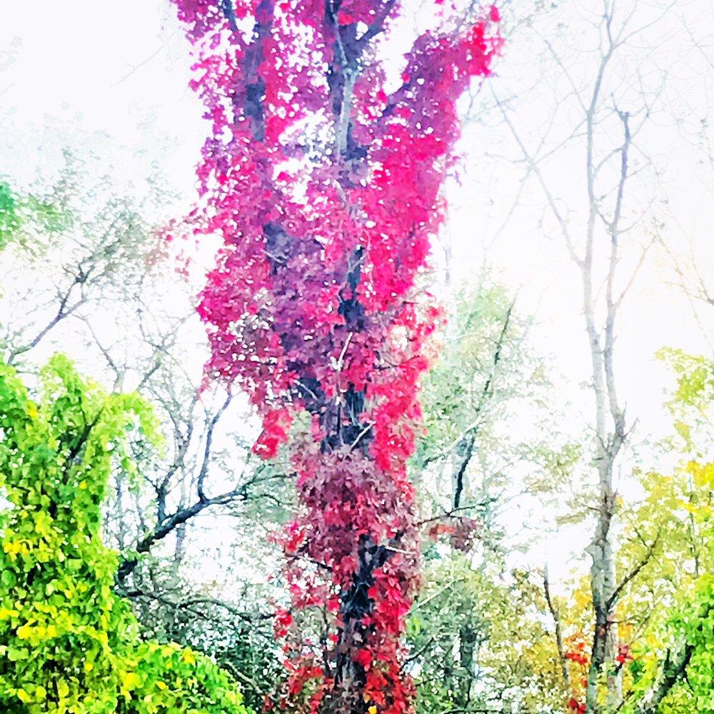 red foliage.JPG