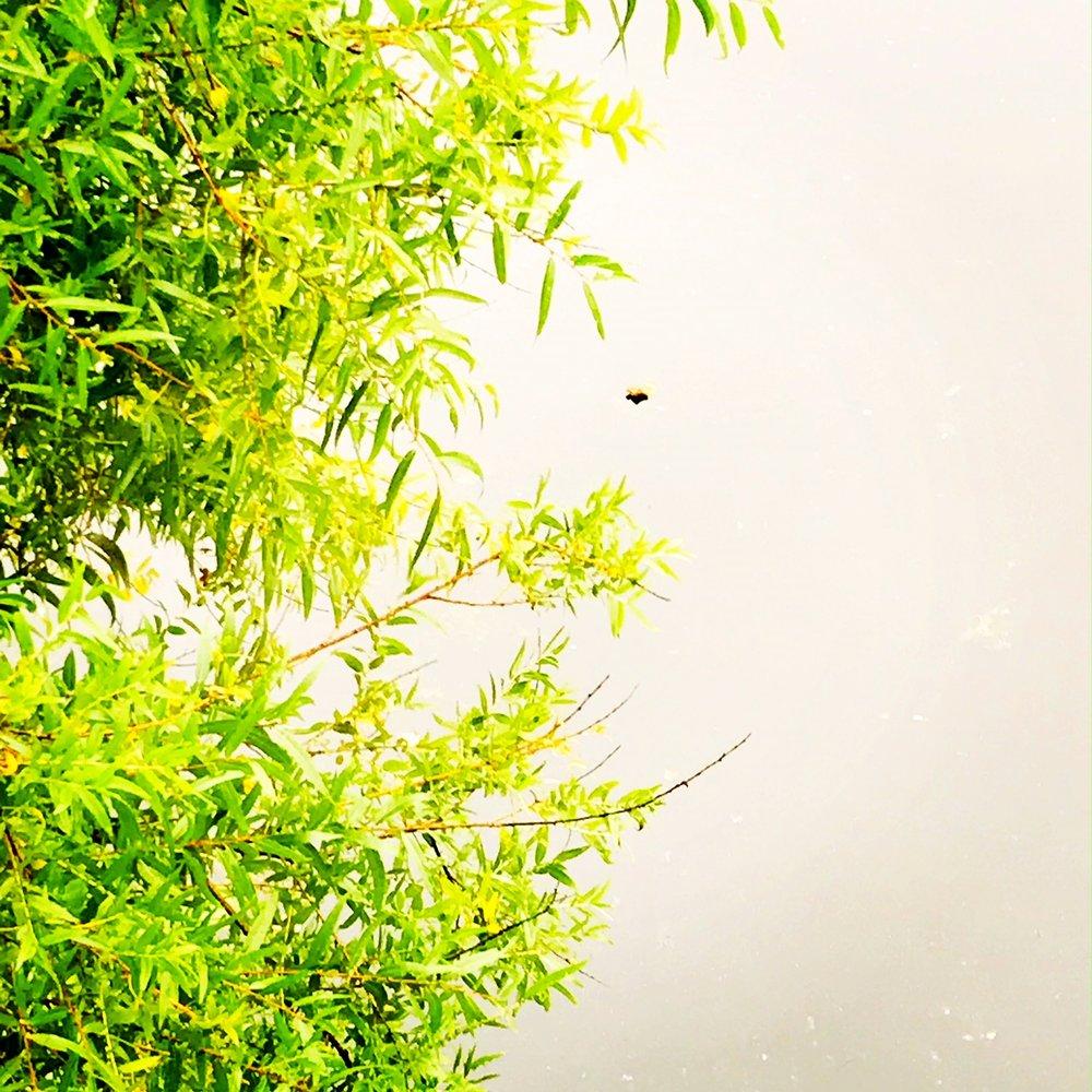 riverview green.JPG