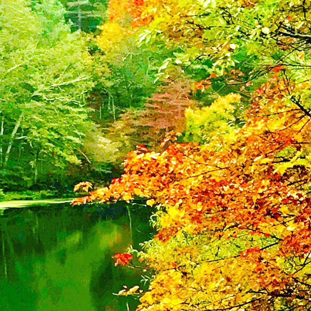 riverview foliage.JPG